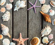 Background of sea shells Stock Photo