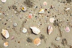 Background of sea shells Royalty Free Stock Photos