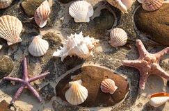 Background of sea shells Stock Photography