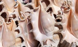 Sea ​​shells in the sun Stock Photos