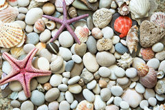 Background of sea shells Stock Images