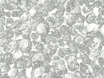 Background with sea snails edit like its drawn. Sea snails fills the entire picture, edit like its drawn, black and white Royalty Free Stock Photo