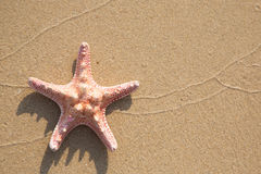 Background of sea star Stock Photo