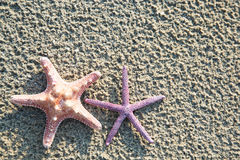Background of sea stars Stock Photos