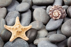 Background of sea stones with starfish Royalty Free Stock Images