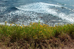 Background sea with yellow flower Royalty Free Stock Photos