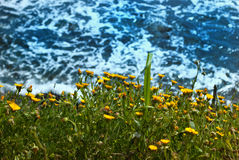 Background sea with yellow flower Stock Image