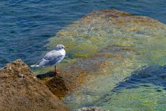 Background with Seagull on water. Miramare, Italy Stock Photo
