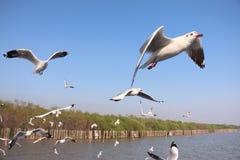 บางปู. Seagulls at bangpoo samutprakan Thailand stock image