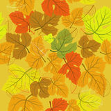 Background seamless autumn Stock Images