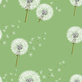 Background seamless pattern with dandelion Stock Photos