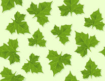 Background seamless pattern of green leaves stock photos