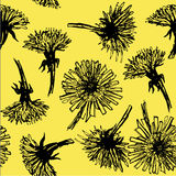 Background seamless pattern hand drawn blooming dandelions on yellow background  Stock Photography