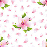 Background seamless pattern with sakura blossom and petals. Beautiful light background seamless pattern with pink sakura blossom - japanese cherry tree and Royalty Free Stock Photo
