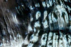 Background of seashell close-up macro in  neon light. Mollusk seashell texture.  royalty free stock image