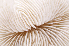 Background of seashell of Fungia , close up Stock Photos