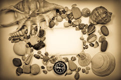 Background with seashells Royalty Free Stock Photography