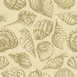 Background with seashells Royalty Free Stock Photo