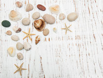 Background with seashells and starfishes stock image