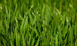 Background with season grass Stock Photos