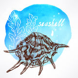 Background with seaweed and shell - 3 Royalty Free Stock Image