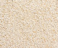 Background of seed Royalty Free Stock Photo