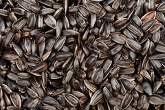 Background of seeds Stock Photos