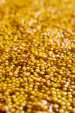 Background of seeds of mustard Stock Images