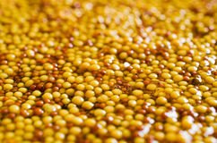 Background of seeds of mustard Royalty Free Stock Photo