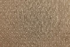 Background of sepia color with round specks. The abstract textured background of sepia color fabric and round light specks are located in ranks on a surface on Stock Image