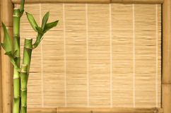 Background series bamboo plant. Live bamboo plant with a bamboo screen background Stock Photo