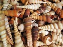 Background with set of seashells Stock Photography
