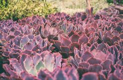 Several varieties of succulents stock photos