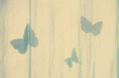 Background, shadow of butterfly. Stock Image