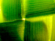 Background. Shadows and Light, fiber, contrasting, nspace, green, line Stock Image
