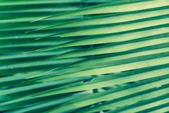Palm Frond Background. Background of sharp lines formed by palm fronds Stock Photography