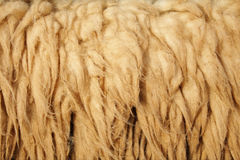 Background sheepskin Royalty Free Stock Photos