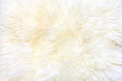 Background of sheepskin fur. Texture of a white, unshaved sheepskin. Natural sheepskin Stock Image