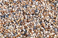 Background from shell. For frames, for background, for photoshop. Shells from the shore of the sea of Azov Royalty Free Stock Image