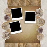 Background with shells. Royalty Free Stock Photos