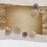 Background with shells. Royalty Free Stock Photography