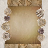 Background with shells. Stock Photography