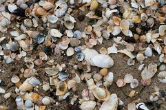 Background shells Royalty Free Stock Images