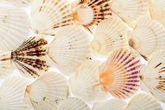 Background of shells Stock Images