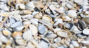 Background with shells stock photo