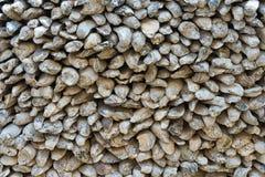 Background shells overlap. The background many shells overlap Royalty Free Stock Images