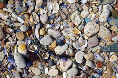 Summer background with shells and stones Stock Photography