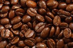 Background of shiny roasted coffee beans Royalty Free Stock Image