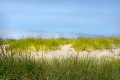 Shoreline grass border and sand dunes against blue sky. Background of shoreline sand dunes with sea grass blowing in the gentle wind. Brilliant blue sky and royalty free stock images