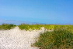 Shoreline grass in sand dunes against blue sky. Background of shoreline sand dunes with sea grass blowing in the gentle wind. Brilliant blue sky and bright white royalty free stock photos
